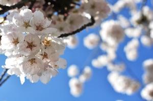 lente liefde